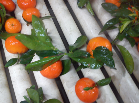 inicio mandarinas
